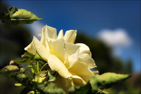 Fleurs-3